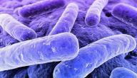ما هي بكتيريا البول