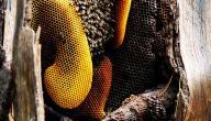 ماذا يطلق على بيت النحل