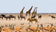 أين تقع ناميبيا