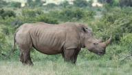 ما هو وحيد القرن