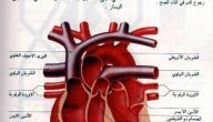 ما هي أمراض صمامات القلب