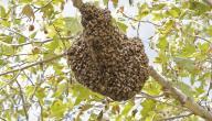 ماذا يسمى بيت النحل
