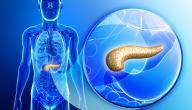 أين يقع البنكرياس في جسم الإنسان