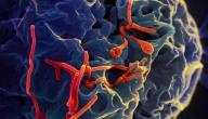ما هو مرض الإيبولا