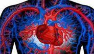 ما هي أهمية دوران الدم في الجسم