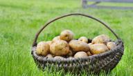 طريقة تخزين البطاطا في الفريزر