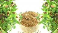 ما فوائد بذرة الكتان