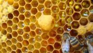 فوائد غذاء ملكات النحل للبشرة