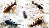طريقة القضاء على النمل