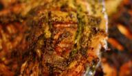 طريقة تتبيل الدجاج للشوي