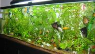 كيفية صنع حوض سمك زينة