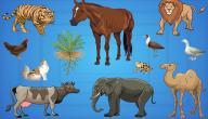 أهمية طبقة التروبوسفير بالنسبة للكائنات الحية