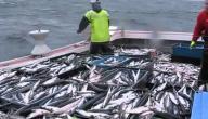 طرق صيد الأسماك