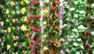 مراحل نمو النباتات
