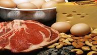 فوائد البروتين للعضلات