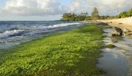 أهمية الطحالب