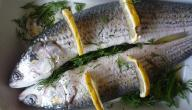 فوائد سمك البوري