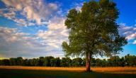 أهمية الشجرة في حياة الإنسان