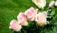 طريقة المحافظة على الورد الطبيعي