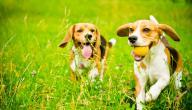 هل تربية الكلاب حرام