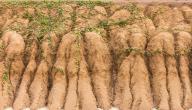 مظاهر تدهور التربة