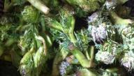 فوائد نبات العكوب