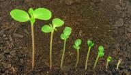 مراحل إنبات البذرة