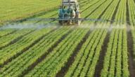 أهمية الزراعة في فلسطين