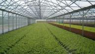 أهمية الزراعة داخل البيوت البلاستيكية