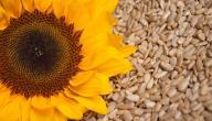 فوائد حبوب زهرة الشمس