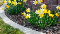 ابيات تتحدث عن جمال الربيع