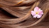 وصفة طبيعية لتطويل الشعر