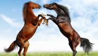 يا خيول الهمة