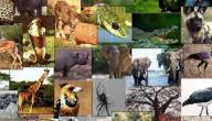بحث عن خصائص الحيوانات
