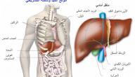 أين يوجد الكبد فى جسم الإنسان