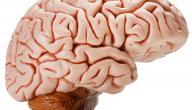 ضمور المخ عند الكبار