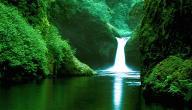 ما هي أهمية غابة الأمازون