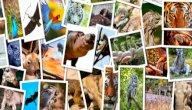 تصنيف الكائنات الحية