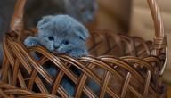 كيف أربي قطة صغيرة