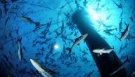 كيف تصيد السمك