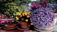 النباتات الداخلية وكيفية العناية بها