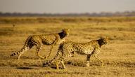 أسماء الحيوانات البرية