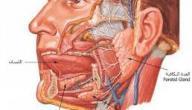 كيف ينشأ الصوت عند الإنسان