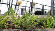 كيف تمتص النباتات الماء