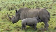 أين يعيش وحيد القرن