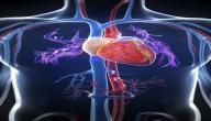 أين مكان القلب في جسم الإنسان