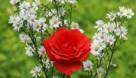 أسماء الورد في اللغة العربية
