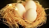 فوائد أكل بيض الحمام