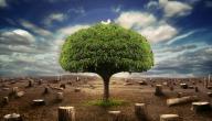 كيف نحافظ على الأشجار