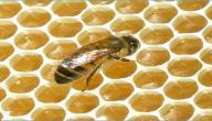 كيف تصنع خلية النحل